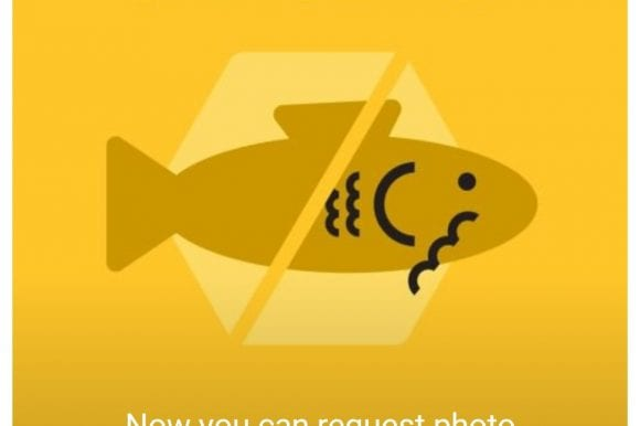 Avoid Becoming a Catfish
